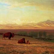 Buffalo On The Plains Art Print