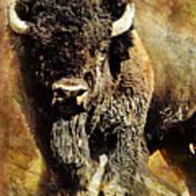 Buffalo Poster Art Print