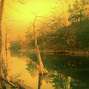 Buffalo River In Gold Art Print