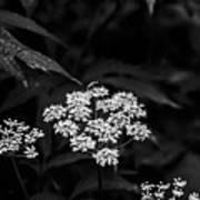 Bug On Flowers Black And White Art Print