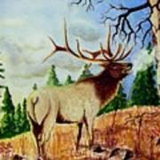 Bugling Elk Art Print