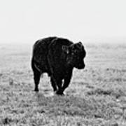 Bull After Ice Storm Art Print
