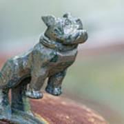 Bull Dog Hood Ornament Art Print