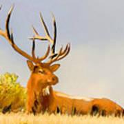 Bull Elk Resting In The Grass Art Print