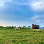 Bull In An East Texas Field Art Print