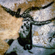 Bull: Lascaux, France Art Print