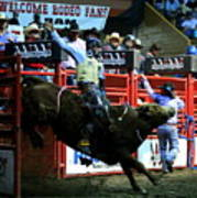Bull Riding At The Grand National Rodeo Art Print