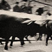 Bull Run 3 Art Print