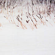 Bull Rushes In The Snow Db Art Print