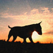 Bull Terrier At Sunset Art Print