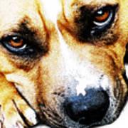 Bull Terrier Eyes Art Print by Michael Tompsett