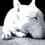 Bull Terrier White On Black Art Print by Michael Tompsett