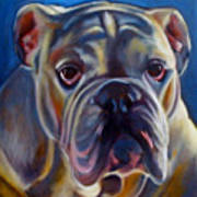Bulldog Expression 2 Art Print