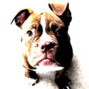 Bulldog Puppy Art Print by Michael Tompsett