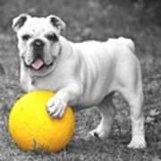 Bulldog Soccer Art Print