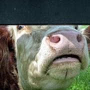 Bull's Eye Peek A Boo Deekflo Art Print
