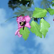 Bumble Bee 2 Art Print