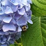 Bumble Bee Blues Art Print