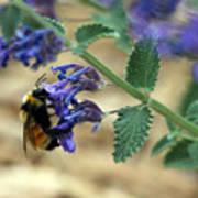 Bumble Bee Delight Art Print