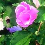Bumble Bee Flying Away  Art Print