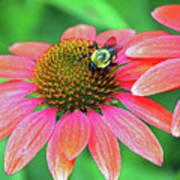 Bumble Bee On Flower Art Print