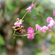 Bumble Bee2 Art Print