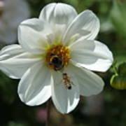 Bumblebee And Bee Art Print