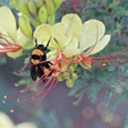 Bumblebee Before Dawn 2 Art Print