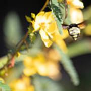 Bumblebee Heading Into Work Art Print