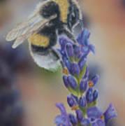 Bumblebee Nr3 Art Print