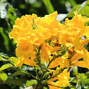 Bunch of yellow flowers in a tree photograph by robert hamm bunch of yellow flowers in a tree poster mightylinksfo