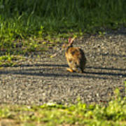 Bunny Eating On The Run Art Print