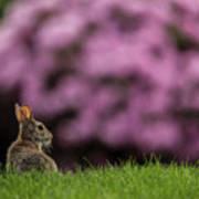 Bunny In The Yard Art Print