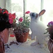 Bunny In Window Art Print