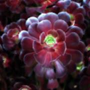 Burgundy Succulenta Art Print