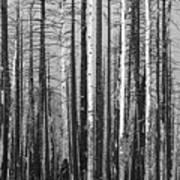 Burnt Forest Art Print