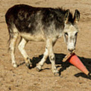 Burro Playing With Safety Cone Art Print