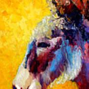 Burro Study II Art Print
