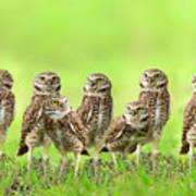 Burrowing Owl Art Print by Thy Bun
