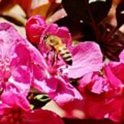 Busy As A Bee 031015 Art Print
