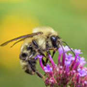 Busy As A Bee Art Print
