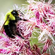 Busy As A Bumblebee Art Print