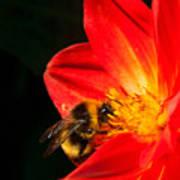 Busy Bee Art Print
