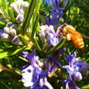 Busy Rosemary Honeybee Art Print