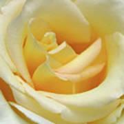 Butter Rose Art Print