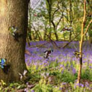 Butterflies In A Bluebell Woodland Art Print
