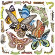 Butterflies Moths Caterpillars Art Print