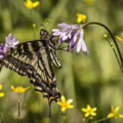 Butterfly 10 Art Print
