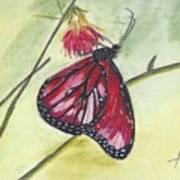 Butterfly 12 Art Print