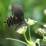 Butterfly 140 Art Print